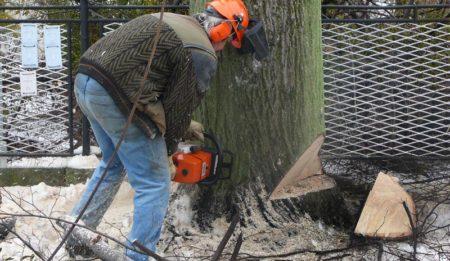 Lesní práce