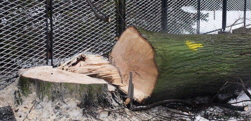 Zpracování dřeva a dřevovýroba